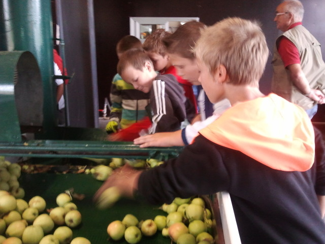 Les CM2 à la fabrication du jus de pommes.